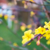 stalker blossoms...
